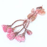 桜の花塩漬け 30g